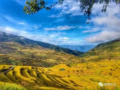 中国农民丰收节   山顶谷粒金黄,河谷瓜果飘香,这就是丰收的红河县!