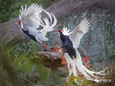 """COP15   红河县:生态环境持续改善 成候鸟""""驿站"""""""