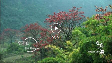 绝美片花震撼首发!COP15大型纪录片《生命之歌》即将在央视播出