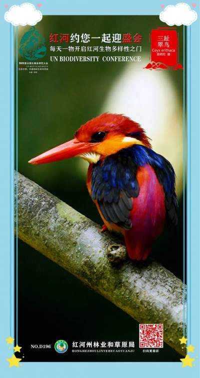 COP15 | 红河约您一起迎COP15盛会 每天一物开启红河生物多样性之门