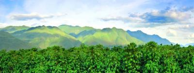 """【走进乡村看小康】央视直播带你探秘""""中国咖啡第一村""""!就在云南这个地方…"""