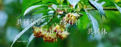 生物多样性  【NO.218】红河约您一起迎COP15盛会 每天一物开启红河生物多样性之门