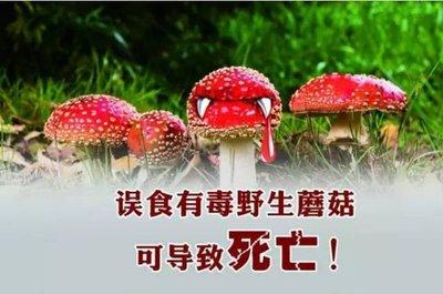 预防食用野生菌中毒告知书