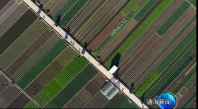 """""""走向我们的小康生活""""主题采访报道聚焦我县蔬菜产业发展"""