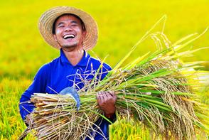 牢牢掌握粮食安全主动权 护航新发展