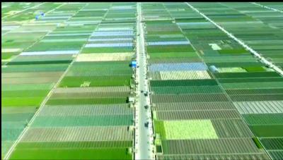 """""""十三五""""成就巡礼 我县高原特色农业蓬勃发展"""
