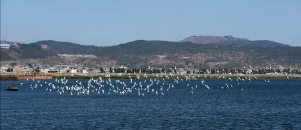 云南九大高原湖泊水质持续好转
