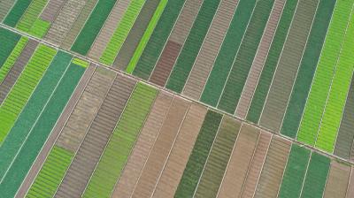 农业生产瞄准高质高效!《人民日报》头版关注云南通海蔬菜远销海外的好经验