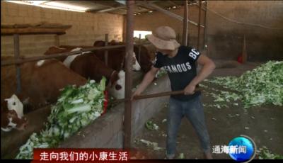 肉牛养殖帮助山区村增收致富