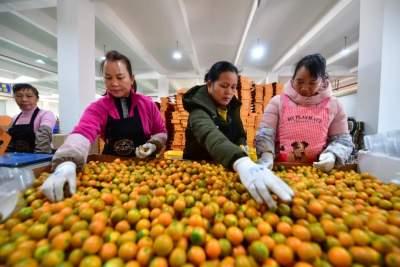 脱贫攻坚胜利后,扶贫政策何去何从? 三大关键词读懂中央农村工作会议