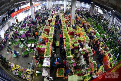 138亿枝!到2025年斗南花卉年交易量力争实现世界第一