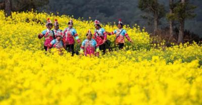 每日一景 | 云南通海:金色花海里的彝家人