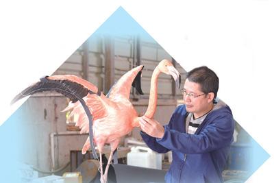 """云南昆明动物博物馆标本制作师罗文寿——让动物标本""""活""""起来(追梦)"""