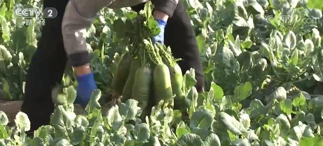 2月份全国蔬菜价格冲高回落