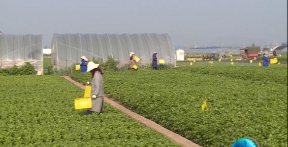我县全面推广化肥农药减量增效措施