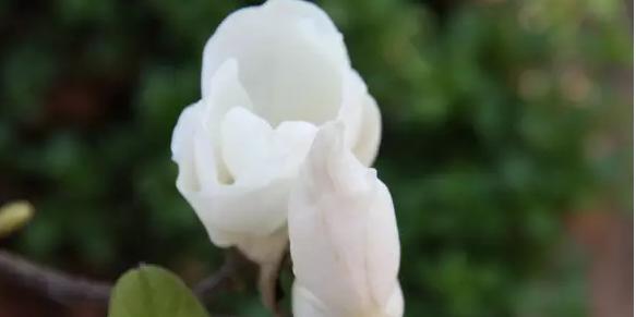 通海圆明寺:满园春色,静待花香