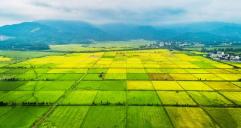 提升粮食产能!今年我国将新建1亿亩高标准农田