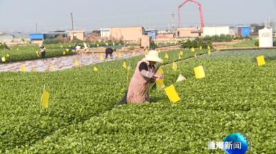 实施绿色防控  促进农业生产高质高效