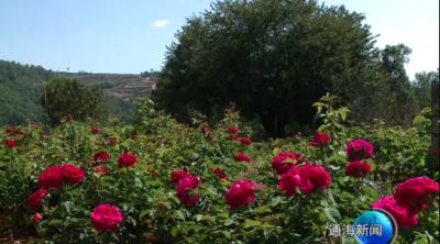 山区群众:栽下脱贫苗盛开致富花