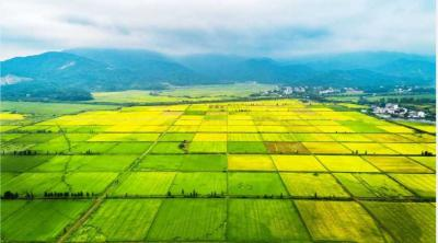 """农业科技进步贡献率超60%——从会种地走向""""慧""""种地"""