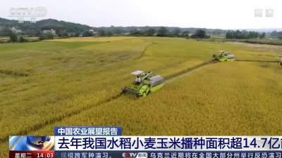 农业农村部:未来10年我国粮食供应保障更加有力