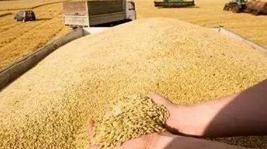 统筹发展和安全 牢牢把住粮食安全主动权