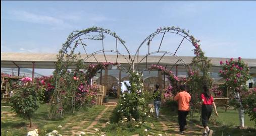 【我们的节日·五一劳动节】五一期间:天禧玫瑰空间吸引八方宾客