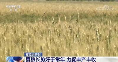 夏粮长势好于常年 各主产区多措并举力促丰产丰收