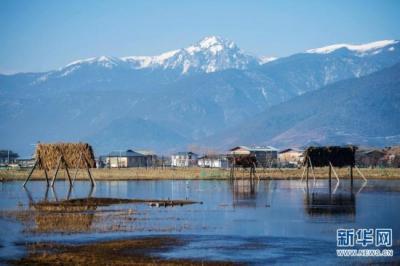 湿地变大了,候鸟增多了——湿地面积增长见证云南生态保护成效