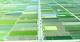 贯彻省委省政府玉溪现场办公会精神: 我县将在杞麓湖临湖区建设绿色有机农业产业示范区
