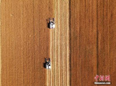 """秋粮生产进入关键期 今年14亿人""""饭碗""""有保障吗?"""
