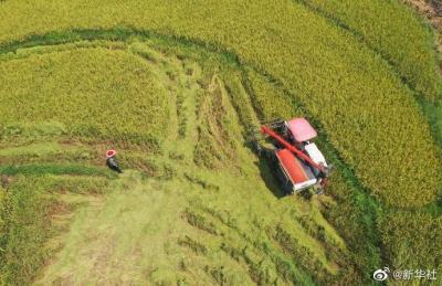 今年全国早稻总产量2802万吨 增长2.7%