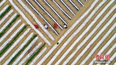第三次全国国土调查:2019年末全国耕地19.18亿亩