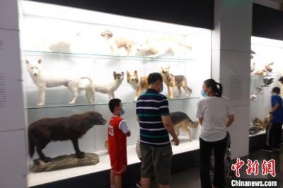 """从冷门到热门,这些小众博物馆有啥""""吸粉秘籍""""?"""