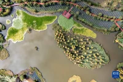 共建地球生命共同体丨COP15大会召开在即,各国宾客将在这里共赏滇池之美……