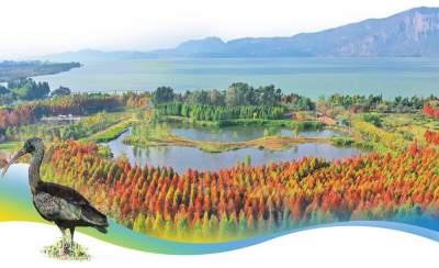 【网聚云南 相约COP15】滇池:生态改善迎动植物回归