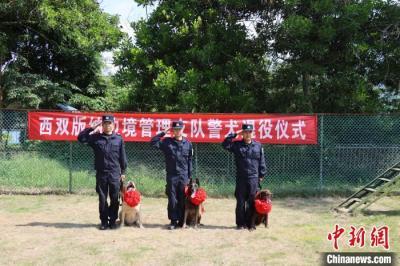 云南西双版纳:三只功勋警犬退役 民警不舍送别