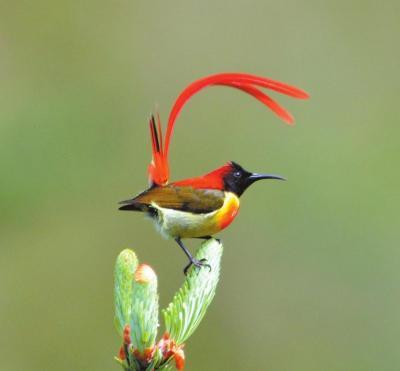 【COP15丨生态文明:共建地球生命共同体】看春城的生物多样性