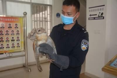 """云南金平:热心市民路上捡到""""大脸""""怪鸟 原是国家二级保护动物"""