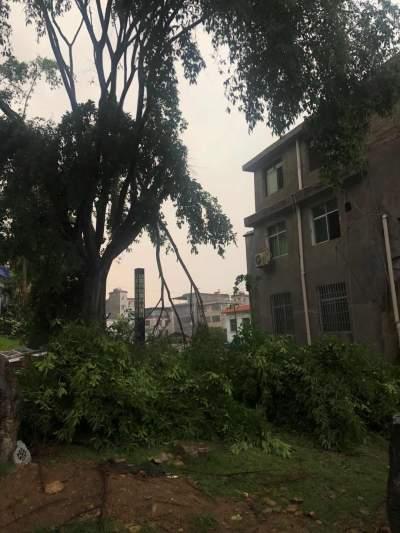 云南金平:暴风、大雨来袭!一秒入夏一秒降温