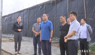 上海市政府驻昆办事处主任罗晓平到金平县考察调研
