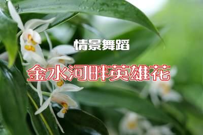 【金平文艺】金水河畔英雄花