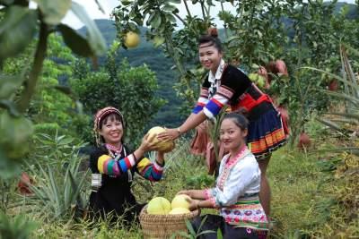七彩云南给你好看 云南文化产业走向高端化、国际化、特色化
