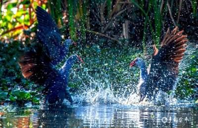 红河:滇南独特的生物多样性基因库