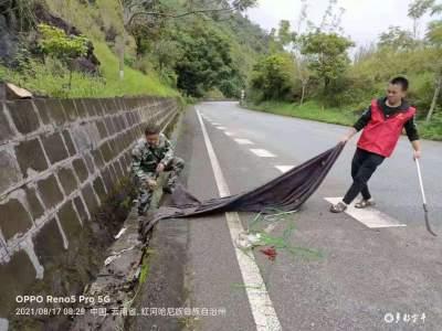 金水河镇:发挥网格化作用  提升乡村人居环境 守护绿水青山