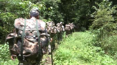 金平县聘用三千余名生态护林员  助力生物多样性保护