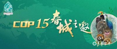 COP15!全球聚焦!生物多样性保护的中国智慧