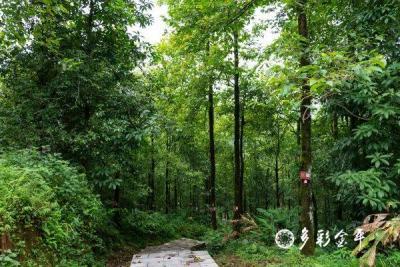 """COP15丨金平分水岭自然保护区:动植物的""""理想栖息地"""""""